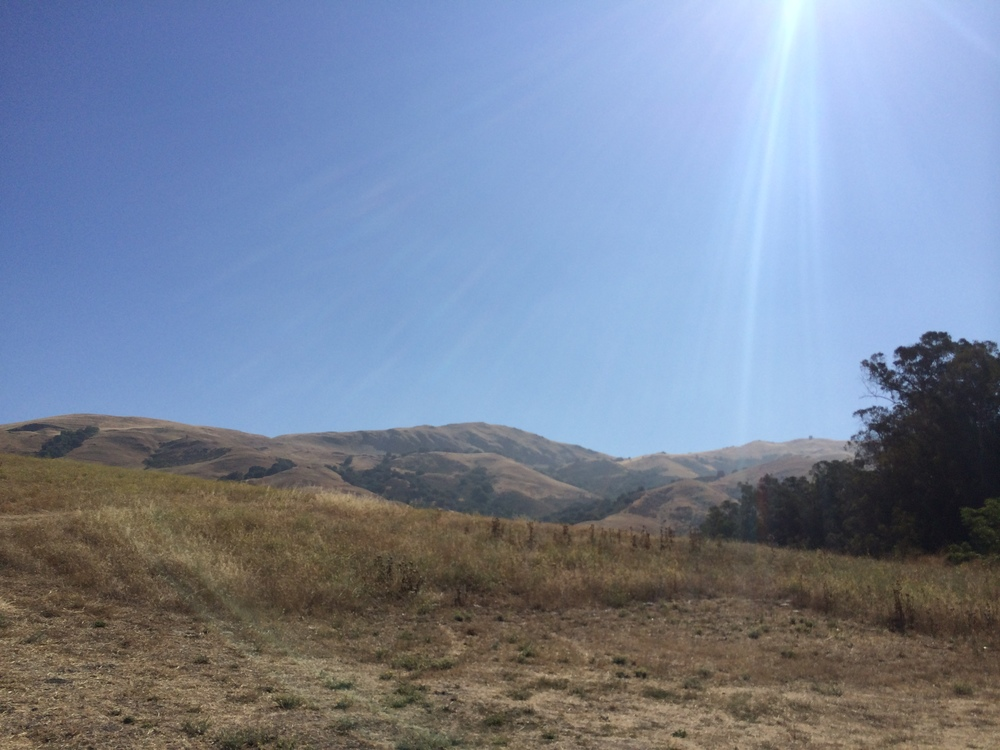 Mission Peak from the Stanford Ave entrance. Climbed and descended once, time to go back up!