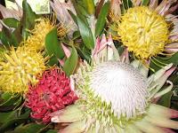 Protea Flowers on Maui Hawaii