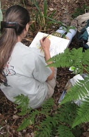 Connie Adams painting in a Maui forest.