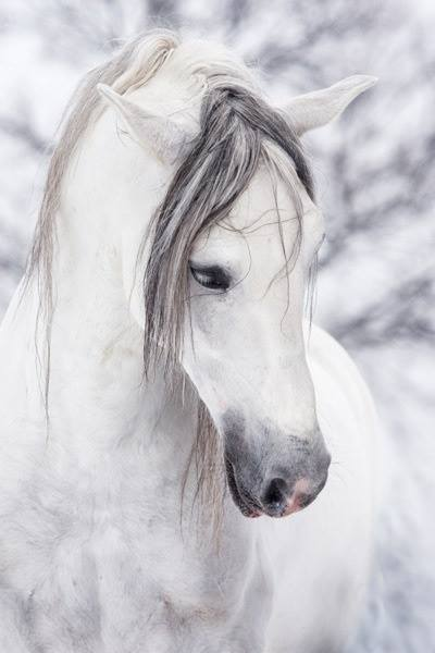 Source: BeautifulHorses.com