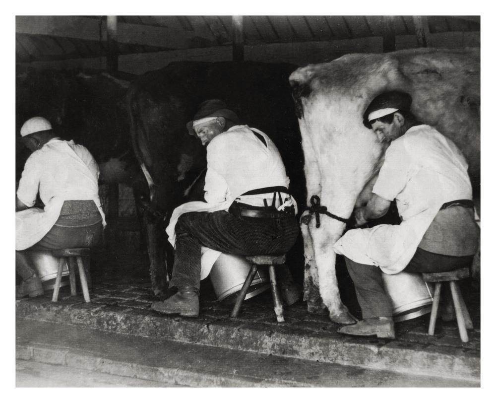 cows milk .jpg