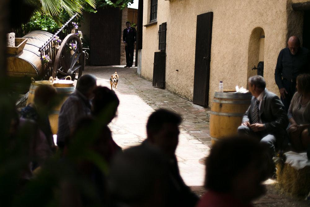 boda-el-mas-de-can-riera-photografeel-bodas-49.jpg