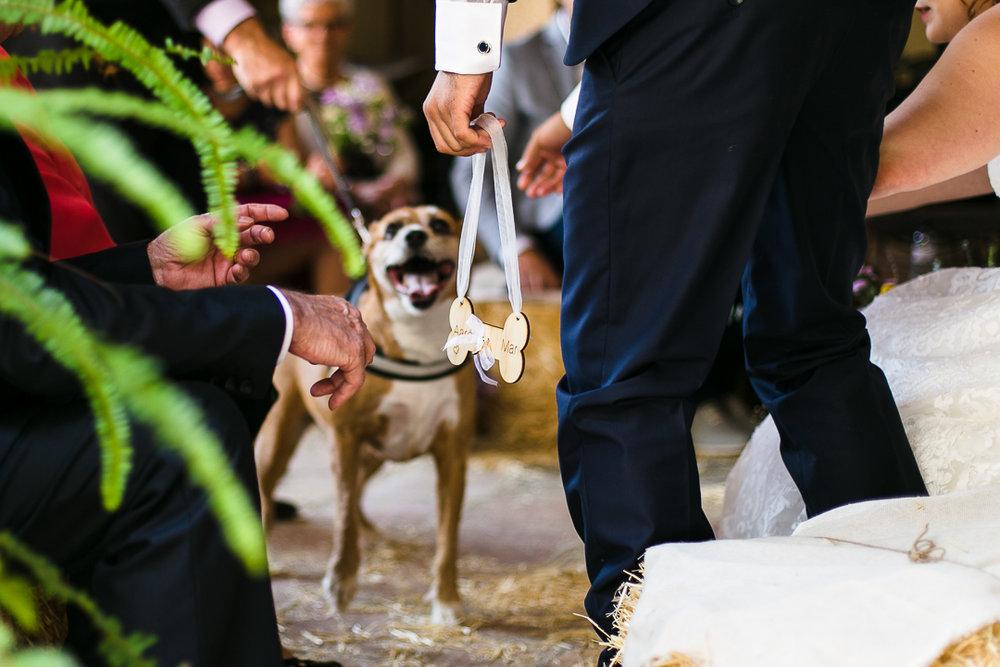 boda-el-mas-de-can-riera-photografeel-bodas-51.jpg