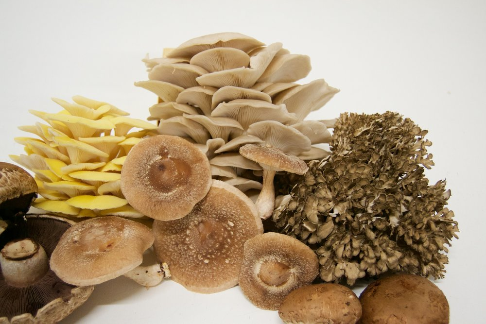 EEMC Mixed Mushrooms.jpg