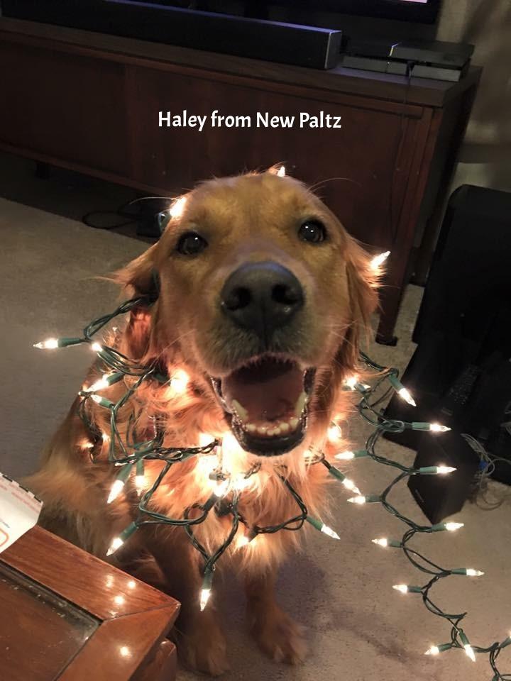 haley new paltz.JPG