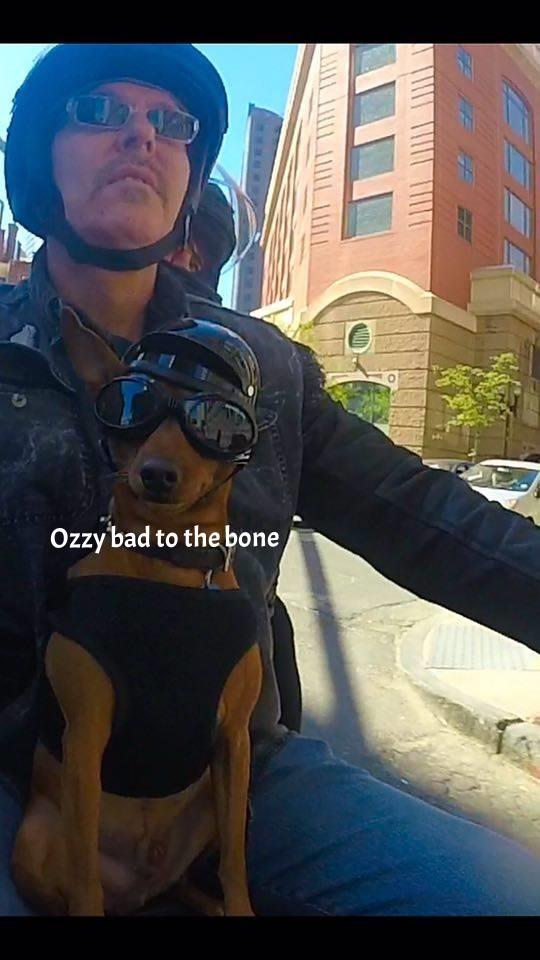 ozzy biker dog.jpg