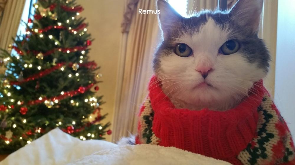 remes the cat.jpeg