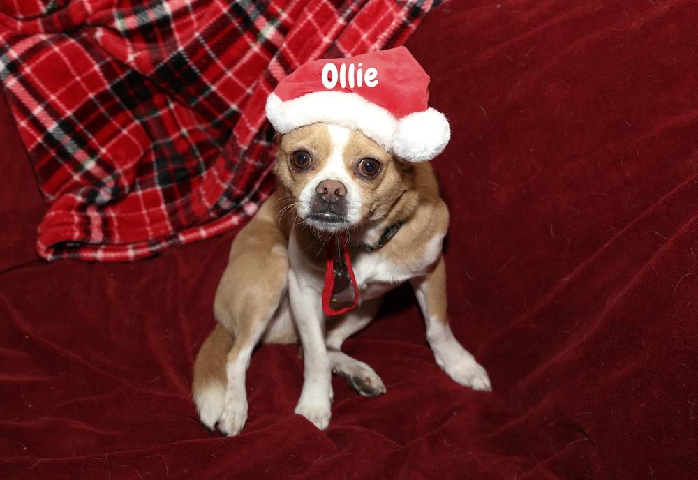 ollie the doggie.jpg