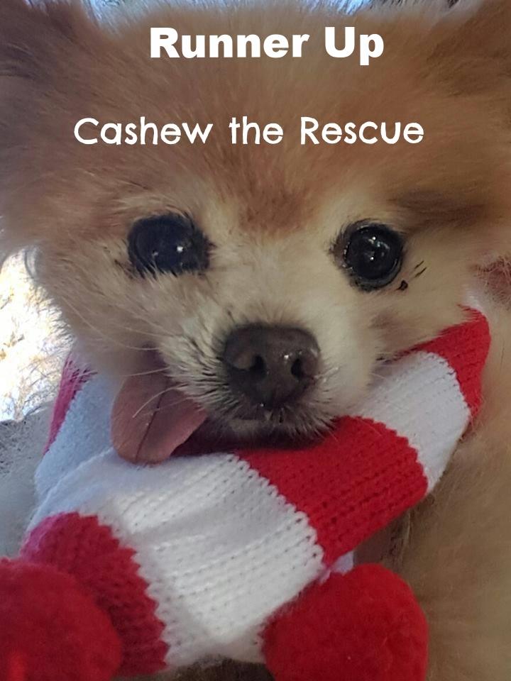 cashew doggie.jpg