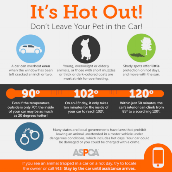Car Leasing Concierge Dog  Safety Tips