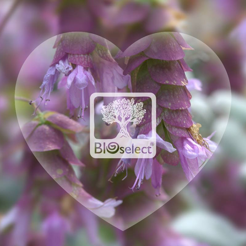 BIOselect Heart