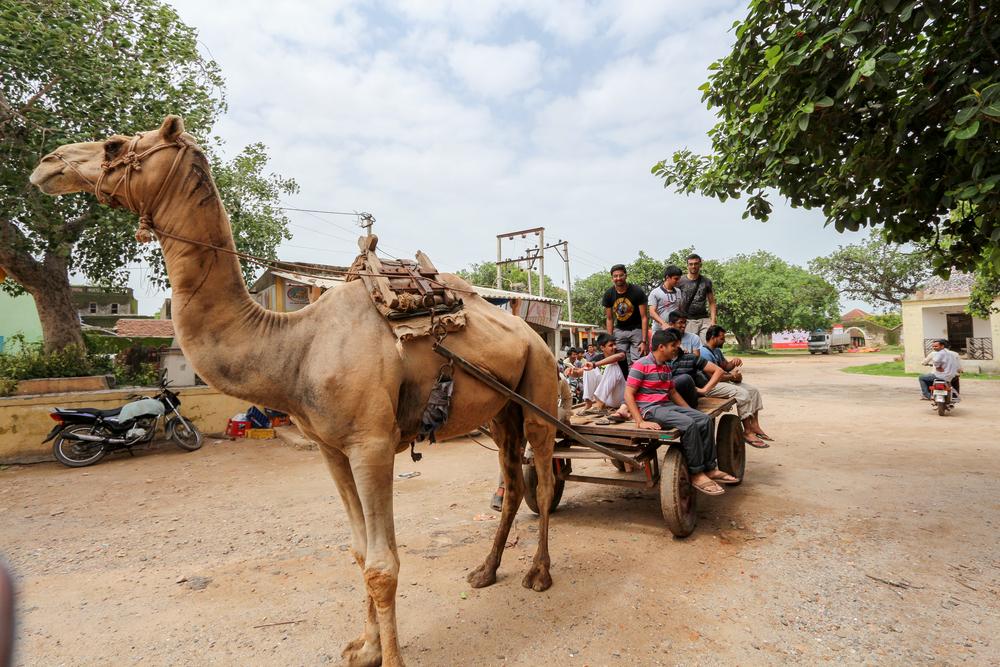 KM India Trip 2014-1531.jpg