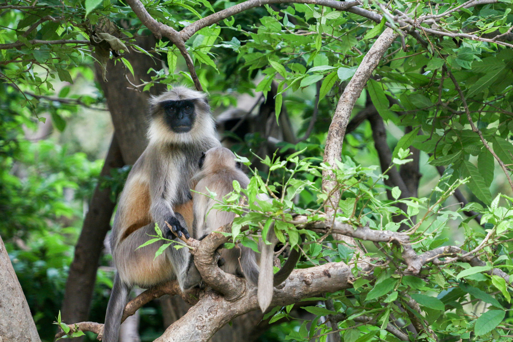 KM India Trip 2014-1685.jpg