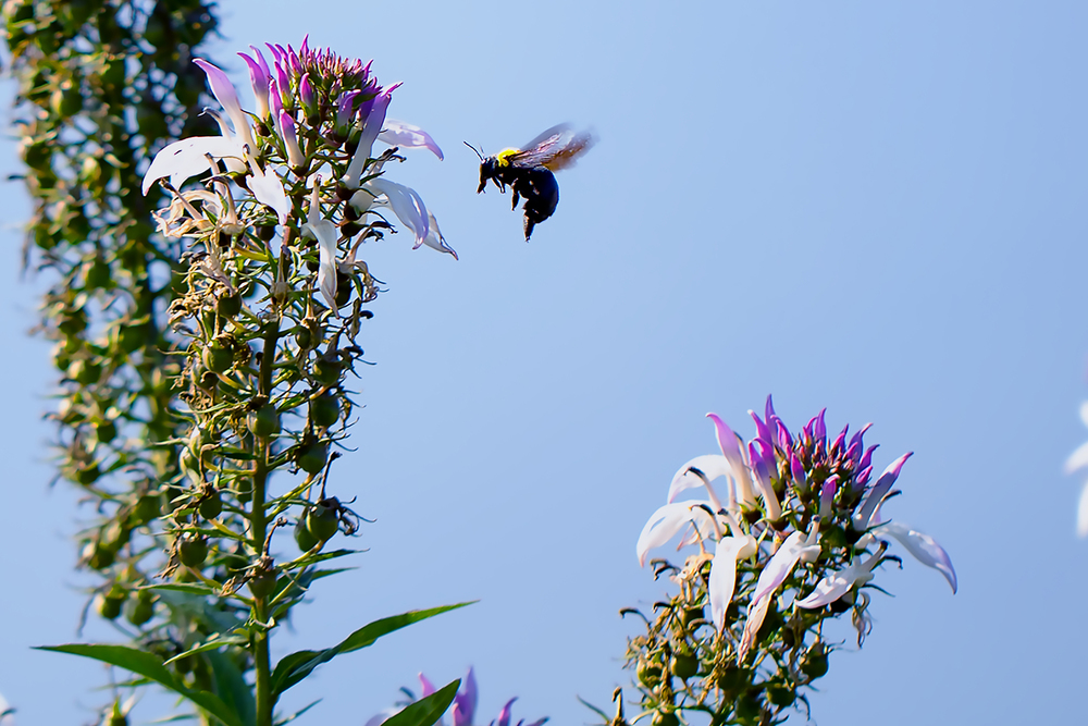 Wasp and flower1.jpg