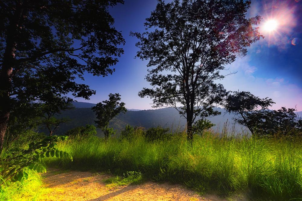 forest sunrise.jpg