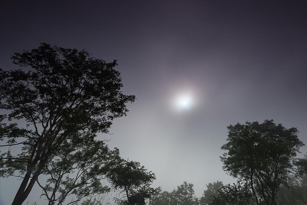 forest mist.jpg