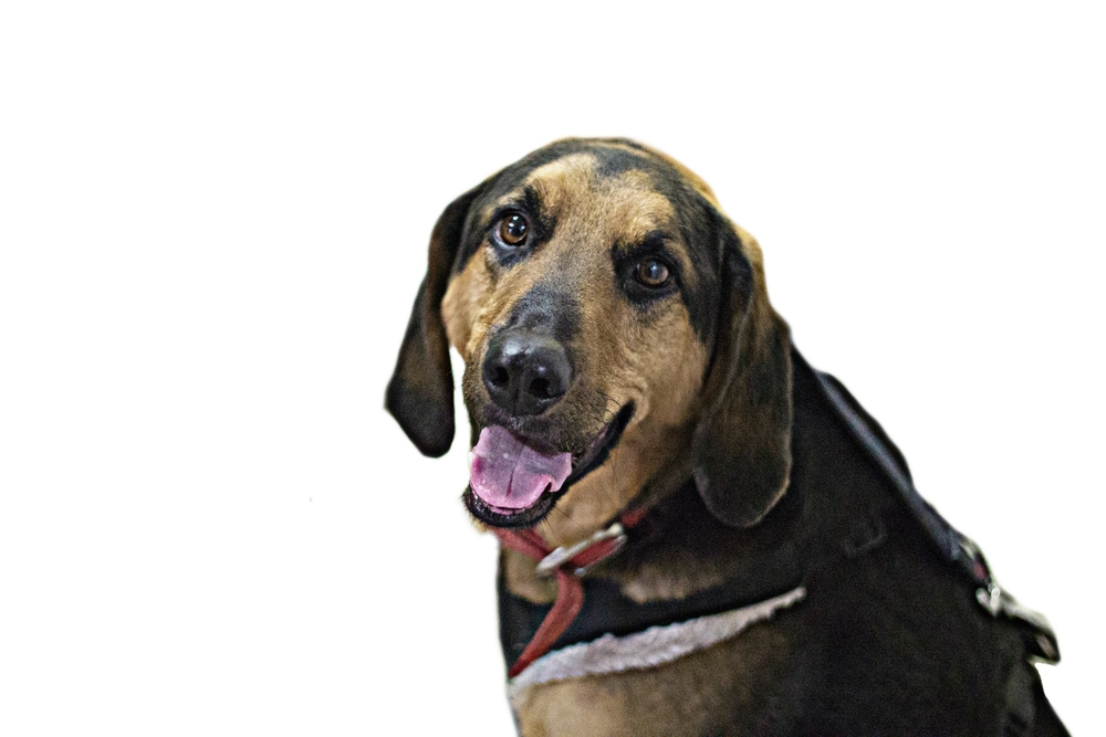 Dogs and PuppyHealth