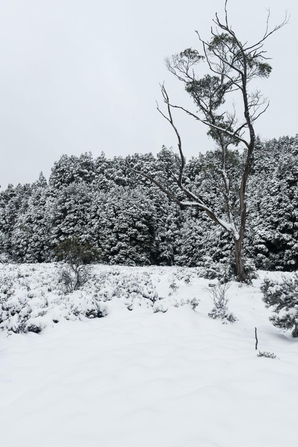 frostscape_gallery_ts17_006.jpg