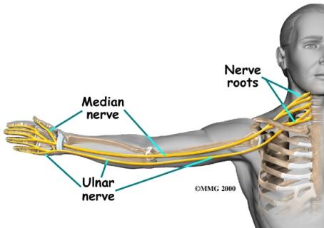median-nerve.jpg