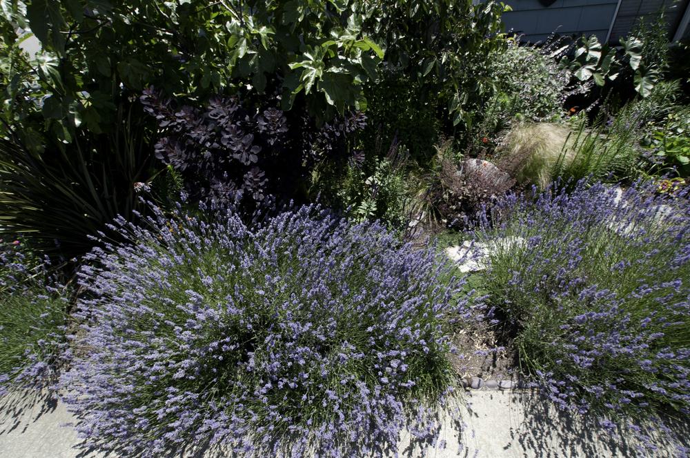 healing-garden-04.jpg