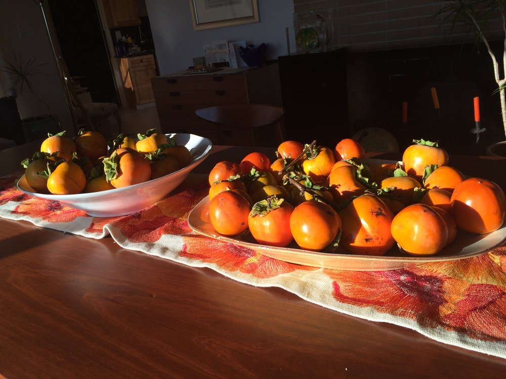 This year's harvest from the persimmon tree in my office garden!