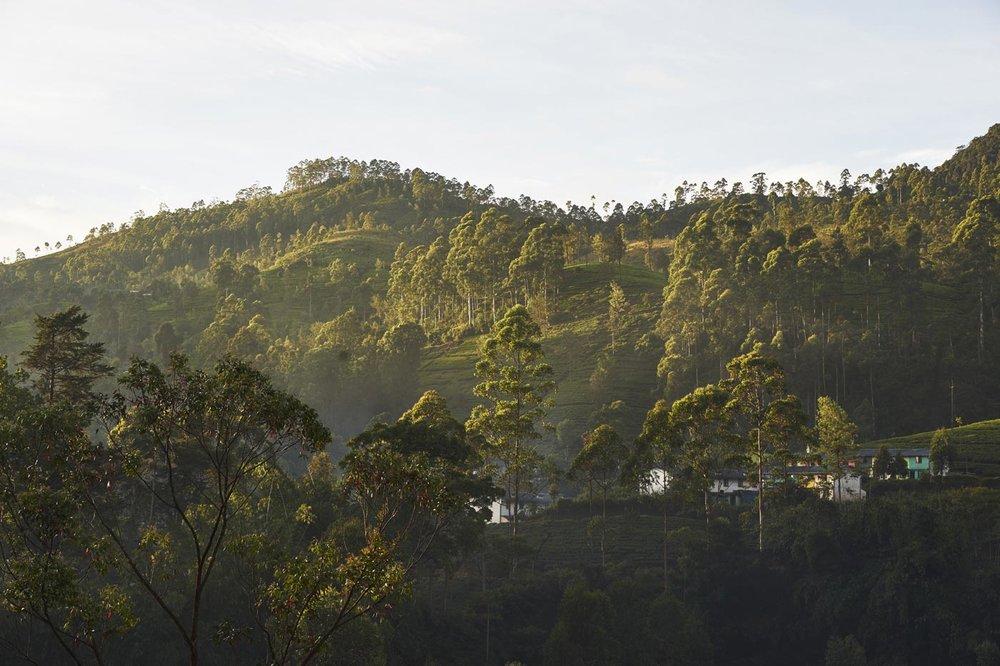 160116-Sri-Lanka-0522.jpg