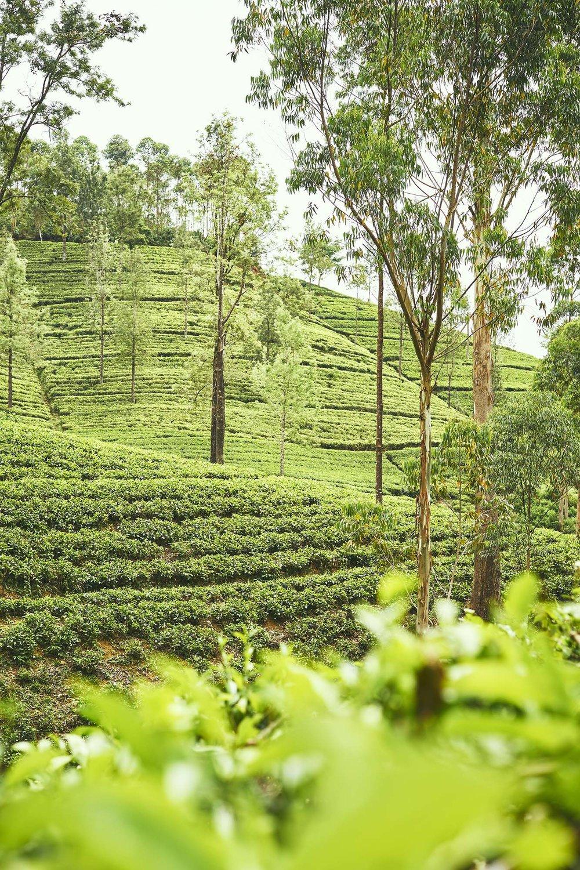 160116 Sri Lanka 0555.jpg