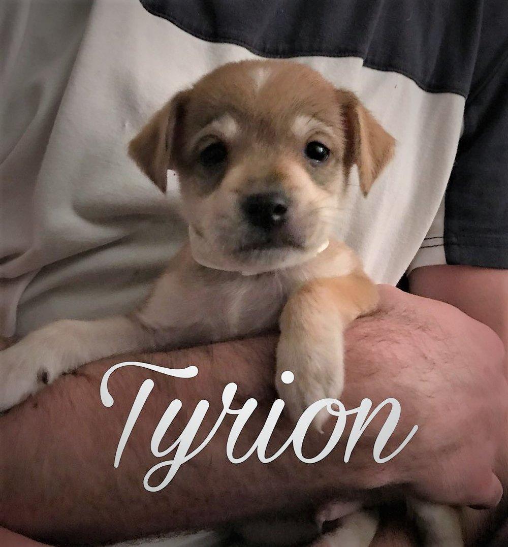 tyrion_1.JPG