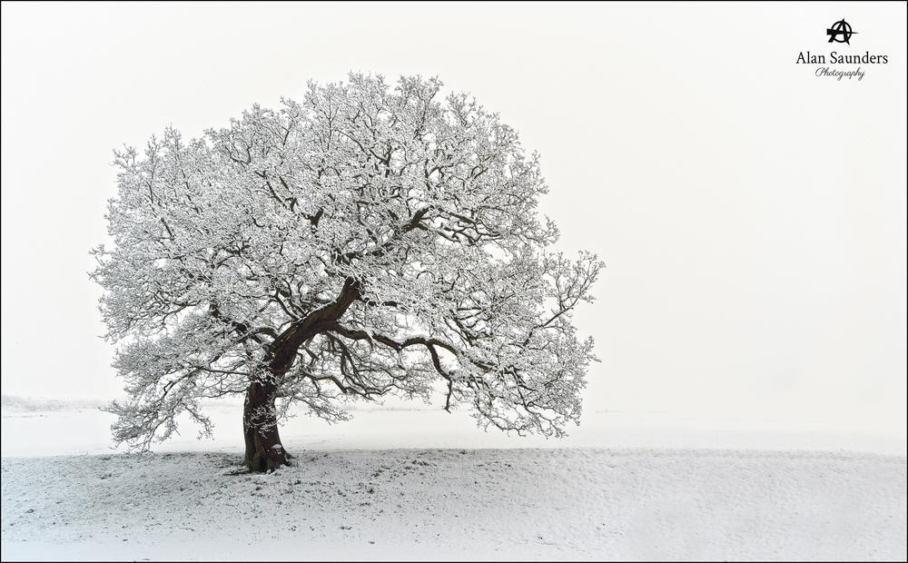 Weight of Winter - Pott Shrigley - Cheshire - January 2015