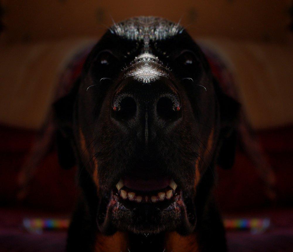 scary-dog.jpg