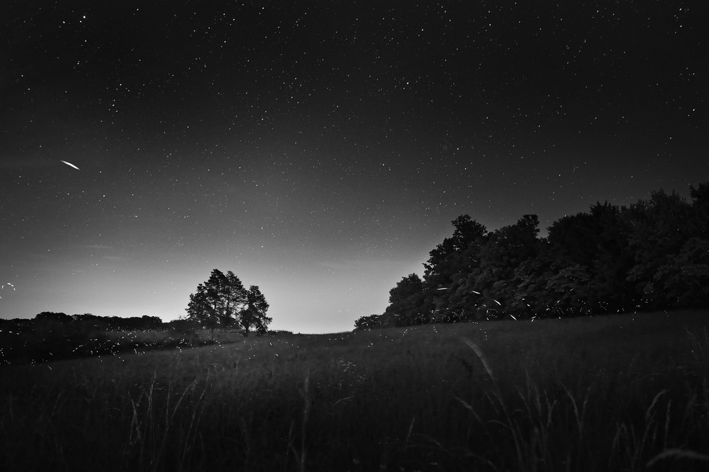 Fireflies at Night - twilight - Southern Illinois -  Photograph