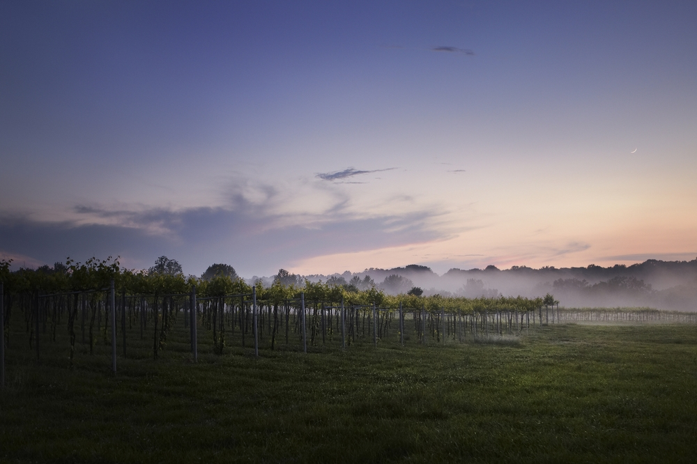 Vinyard Landscape - Southern Illinois - Blue Sky Vinyard - Photo