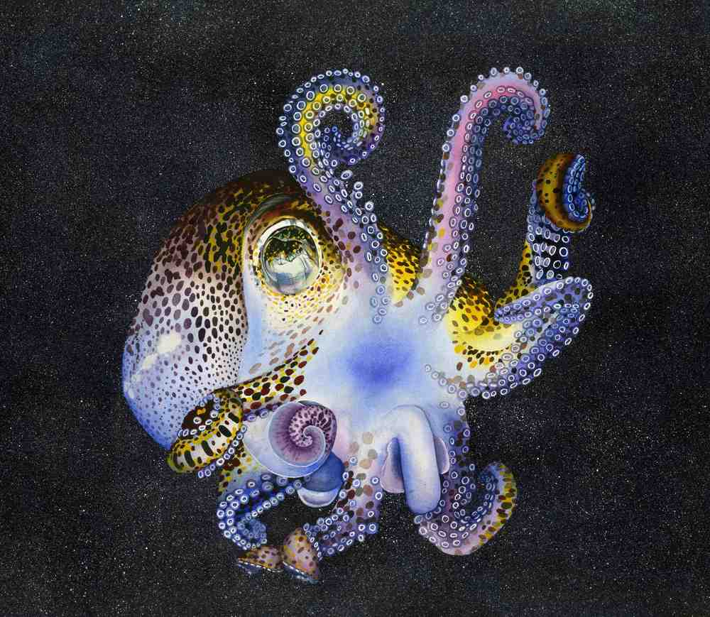 Bobtail Squid smaller.jpg