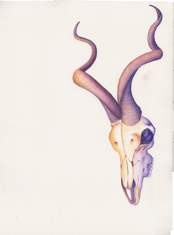 Kudu (small).jpg