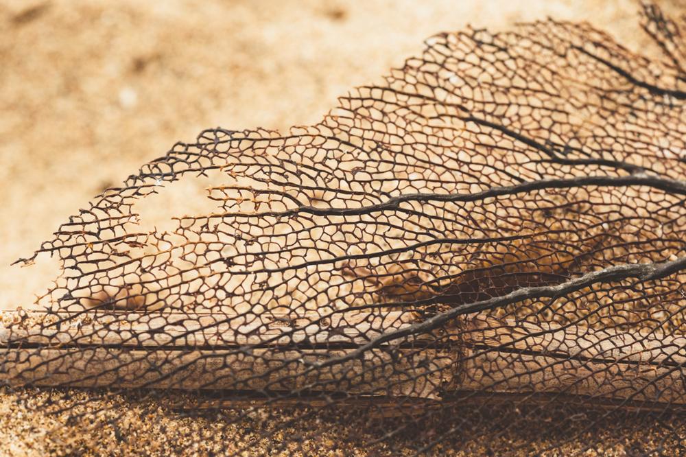 Puerto Rico beach pavo textiles-44.jpg