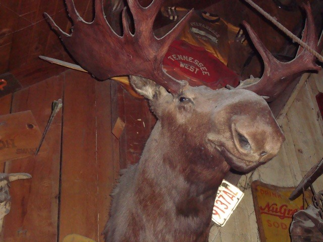moose head lube.jpg