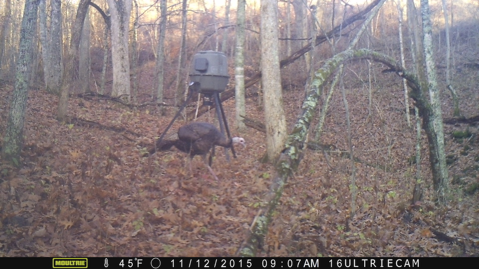 Turk Nov 12 15 MFDC0464 copy.jpg