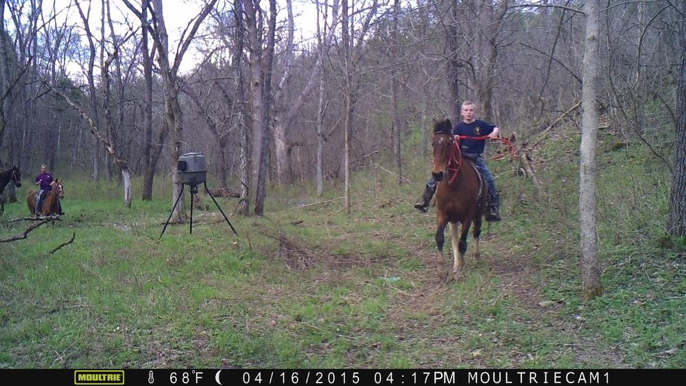Horse Apr 16 15 16174600.JPG