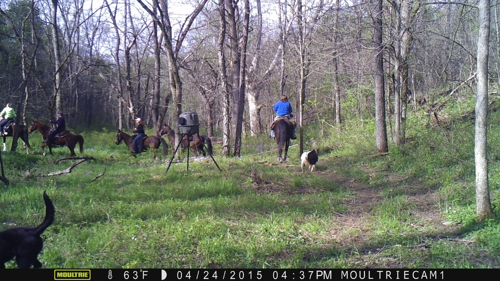 Horse Apr 24 15 16372700.JPG