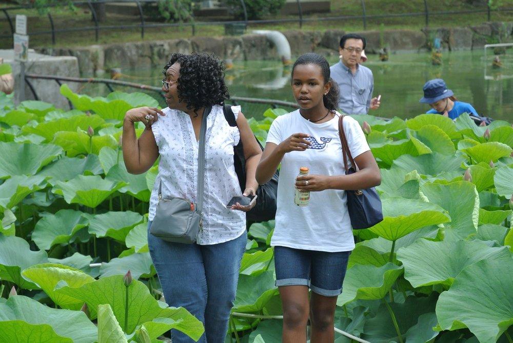 WalkingThroughThe Lotus2.jpg