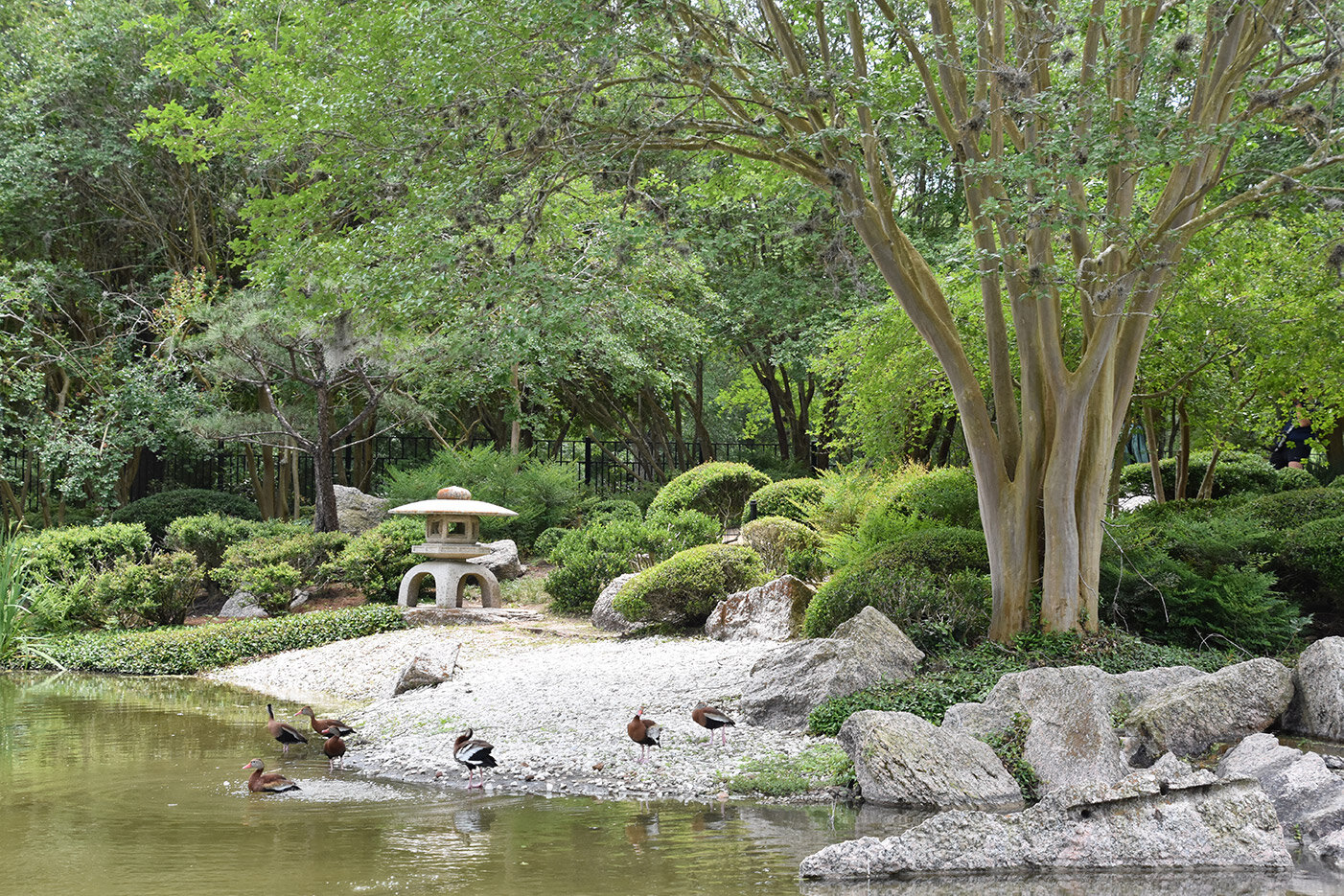 Houston S Japanese Garden Lecture Japan America Society Of Houston