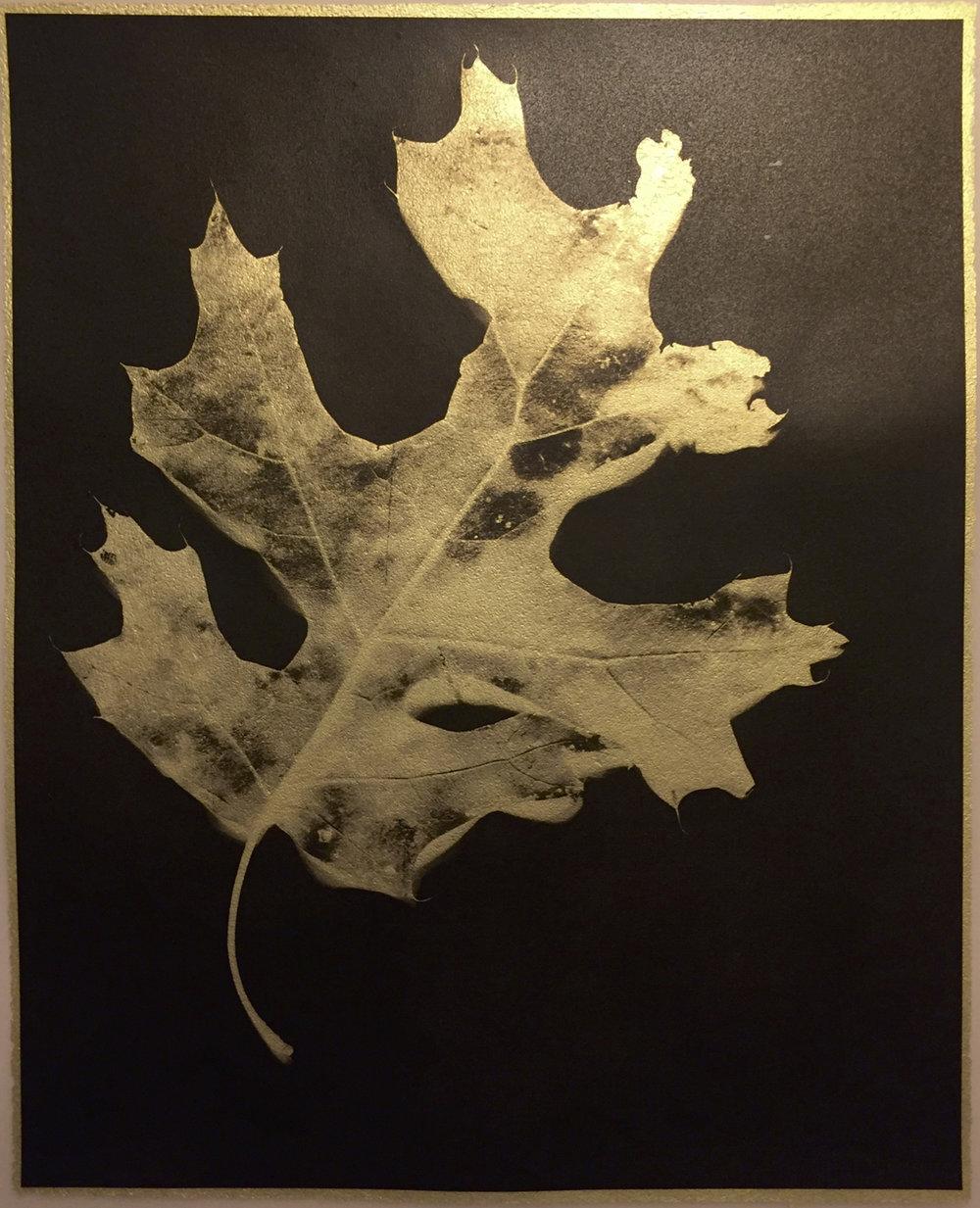 Deciduous Leaf