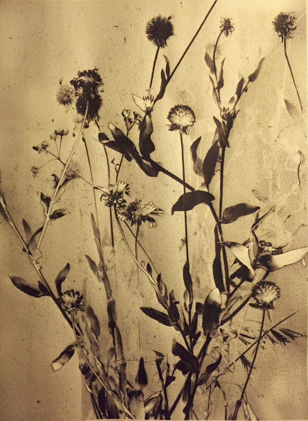 Singing of Wildflowers