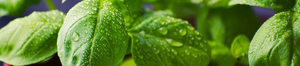spinach banner.jpg