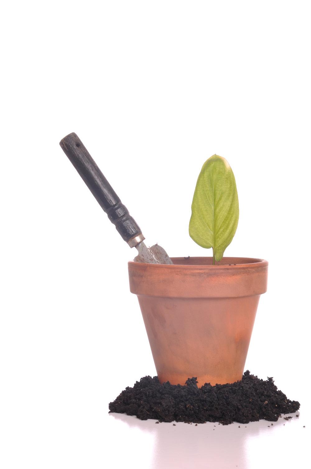 gardening_MyTfj1CO.jpg