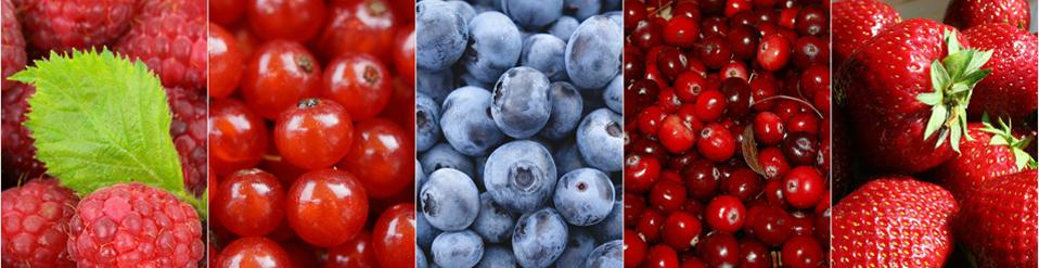 berries banner.jpg