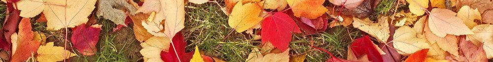 autumn spacer2.jpg