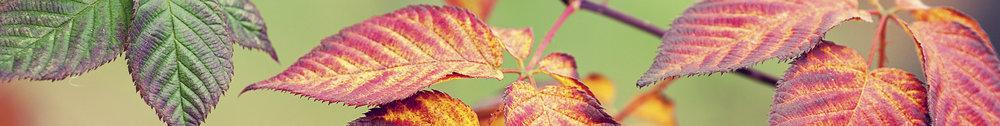 autumn spacer4.jpg