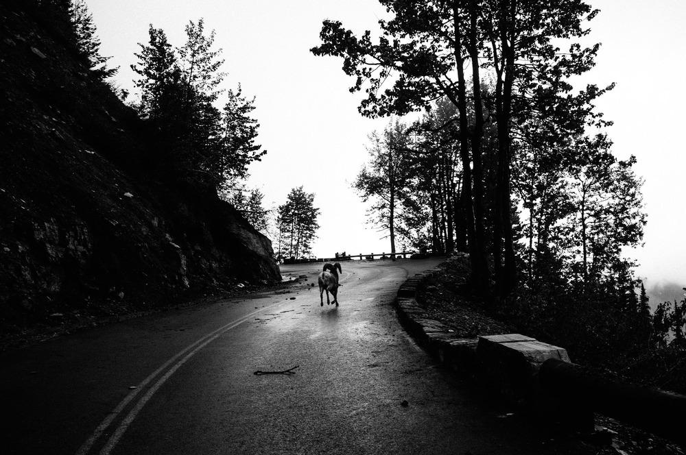 CQ-The Road05.jpg