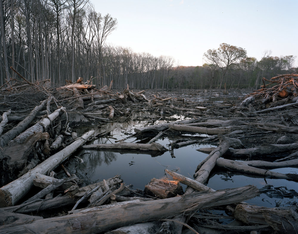 Flooding of clear-cutting site on Old Ogeechee Road  Screven County